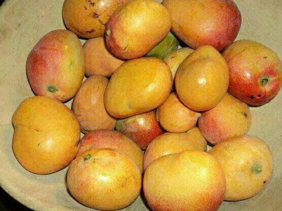 Des mangues