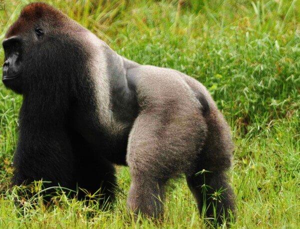 Aires Protégées terrestres en Guinée