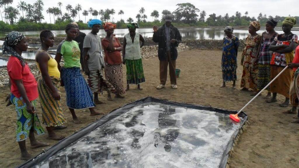 """Ce projet a été lancé par l'ONG """"Réseau Guinéen des Zones Humides"""" fin 2012, avec l'appui de la commune de Douprou, du Fonds pour l'environnement mondial et du Programme des Nations Unies pour le développement. Toutes les photos ont été fournies par l'ONG."""