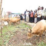 Journées de  l'élevage à Labé: Les ambitions du Président Alpha Condé pour le secteur