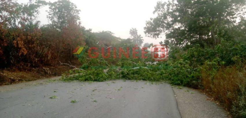 Manif du FNDC : la route N'Zérékoré-Beyla barricadée par des troncs d'arbre !
